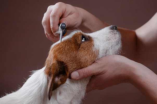Terrier getting combed