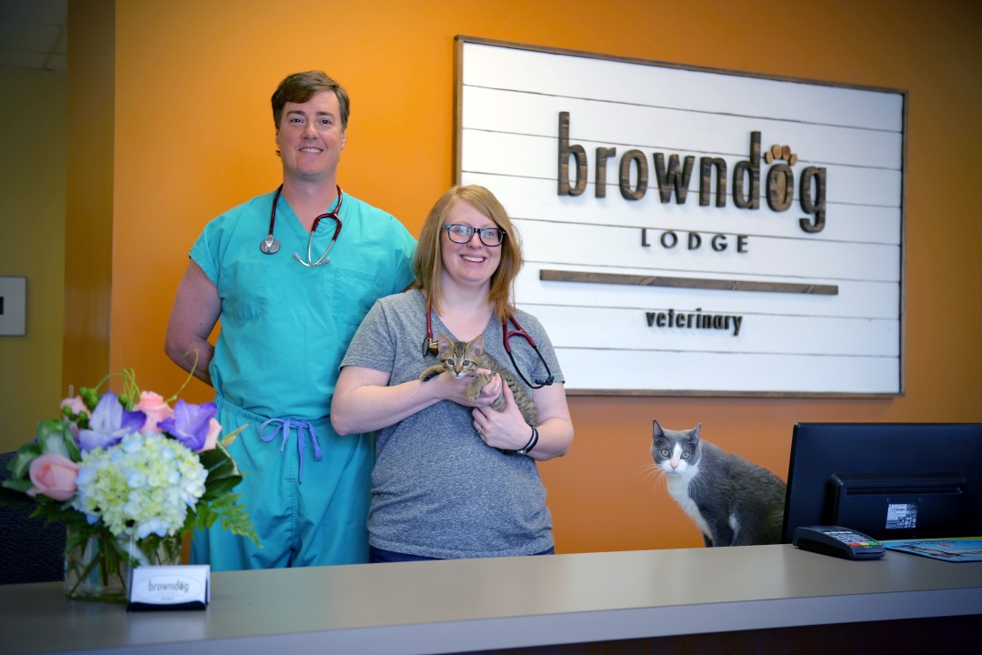 brown dog vet veterinarians